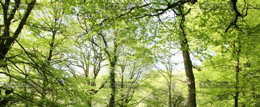 MOD ART - Tree Splendor S8200 slider