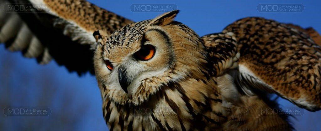 MOD-ART-owl-slider-1024x419 AA